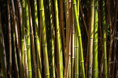 Designs Similar to Bamboo by Ricky Barnard