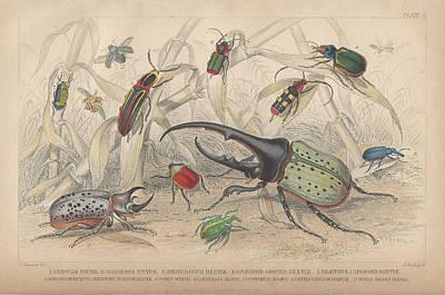 Beetle Drawings