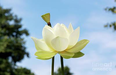 Designs Similar to Lotus Debbie Gibson Flower