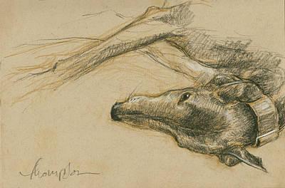 Greyhound Drawings Prints