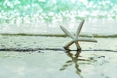 Seashell Photographs Prints