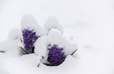 Designs Similar to Winter In Spring Hyacinth