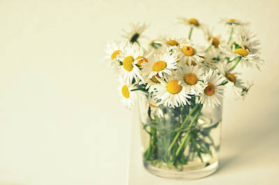 Designs Similar to Big Bunch Of Camomile Flowers