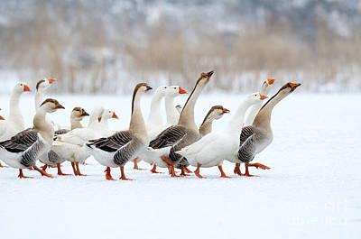 Ornithology Art