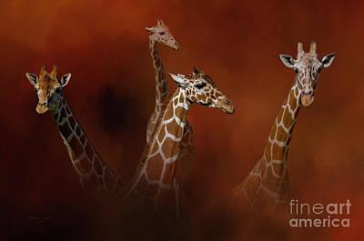 Colorful Giraffe Photographs