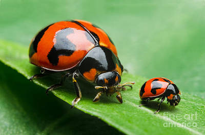 Designs Similar to Insects by Common Human