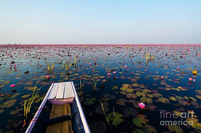 Sea Lily Photographs