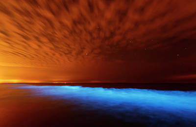Bioluminescent Photographs