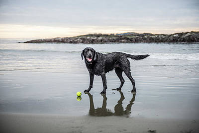Designs Similar to   A Dog On A Beach With A Ball