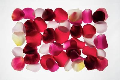 Designs Similar to Back Lit Flower Petals