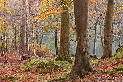 Designs Similar to Baneriggs Wood Near To Grasmere