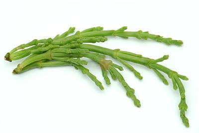 Designs Similar to Edible Seaweed