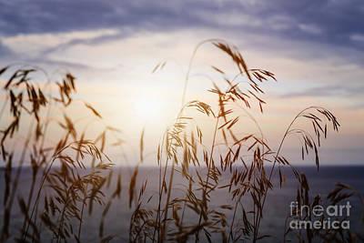 Designs Similar to Grass At Sunset