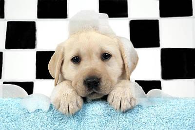 Designs Similar to Labrador Puppy In Bath