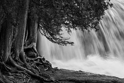 Rooted In Spring Cedar Trees Roots Spring Melt Gooseberry Falls Waterfall Photographs