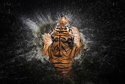 Designs Similar to Tiger Splash by Win Leslee