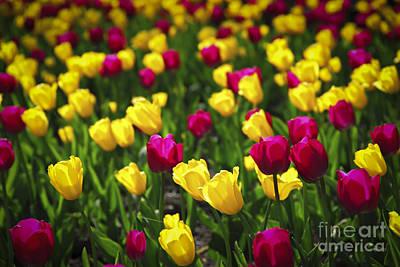 Designs Similar to Tulips by Elena Elisseeva