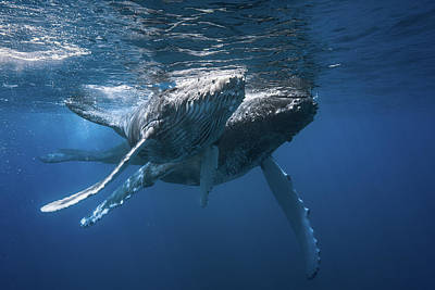 Designs Similar to Humpback Whale