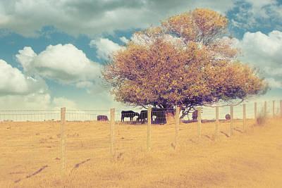 Fence Row Photographs
