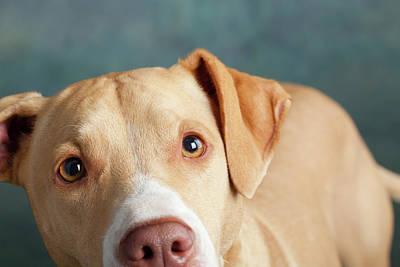 Designs Similar to Portrait Of Lab Hound Mix Dog