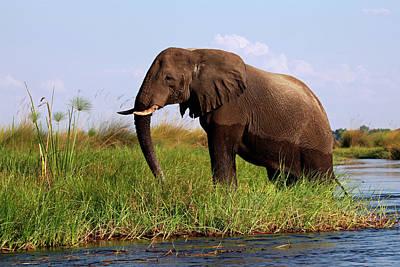 Designs Similar to Botswana, Okavango Delta