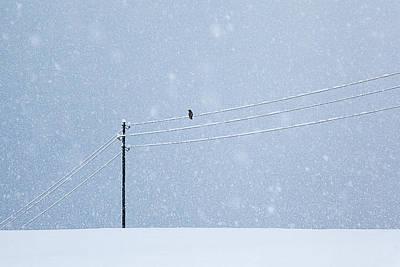 Crow Photographs