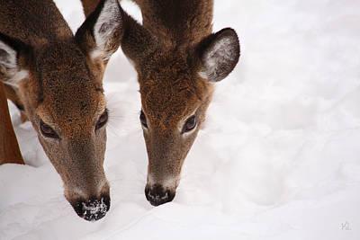 Two Deer Photographs