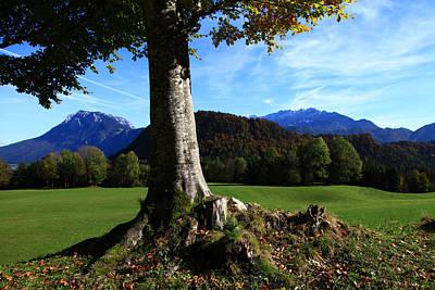 Designs Similar to Alpine Tree by Falko Follert