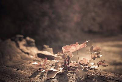 Designs Similar to Autumn Leaves by Amanda Elwell
