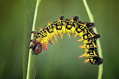 Larvae Art