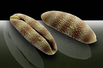 Bromelia Photographs