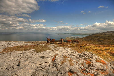 Designs Similar to Burren Donkeys by John Quinn
