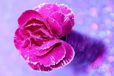 Designs Similar to Carnation Dream