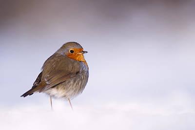 Birds In Winter Art Prints