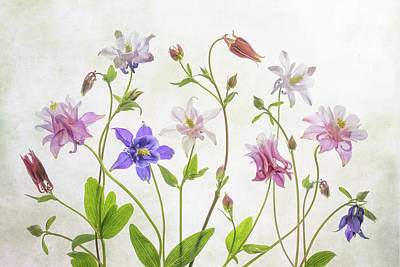 Designs Similar to Columbine by Mandy Disher