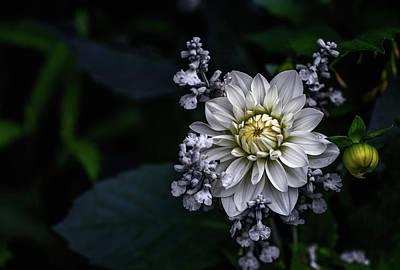 Designs Similar to Dahlia Flower by Ronny Olsson