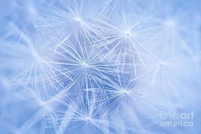 Designs Similar to Dandelion Atmosphere