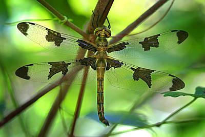 Dragonfly Photographs Original Artwork