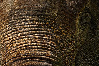 Smithsonian National Zoo Art