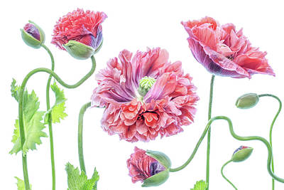 Designs Similar to Fancy by Mandy Disher