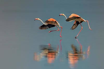 Designs Similar to Flamingo Landing by Yun Wang