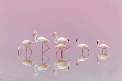 Designs Similar to Flamingos by Eiji Itoyama