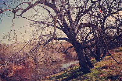 Sycamore Grove Park Photographs