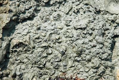 Palaeozoology Art