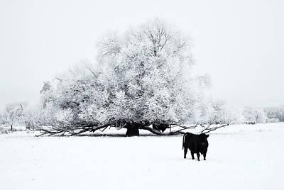 Frost Photographs Original Artwork