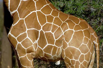 Designs Similar to Giraffe Skin