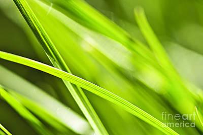Grass Blade Prints