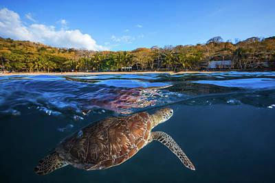 Designs Similar to Green Turtle - Sea Turtle