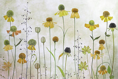 Designs Similar to Helenium by Mandy Disher