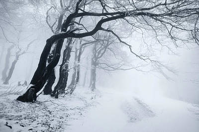 Designs Similar to In The Winter Forest